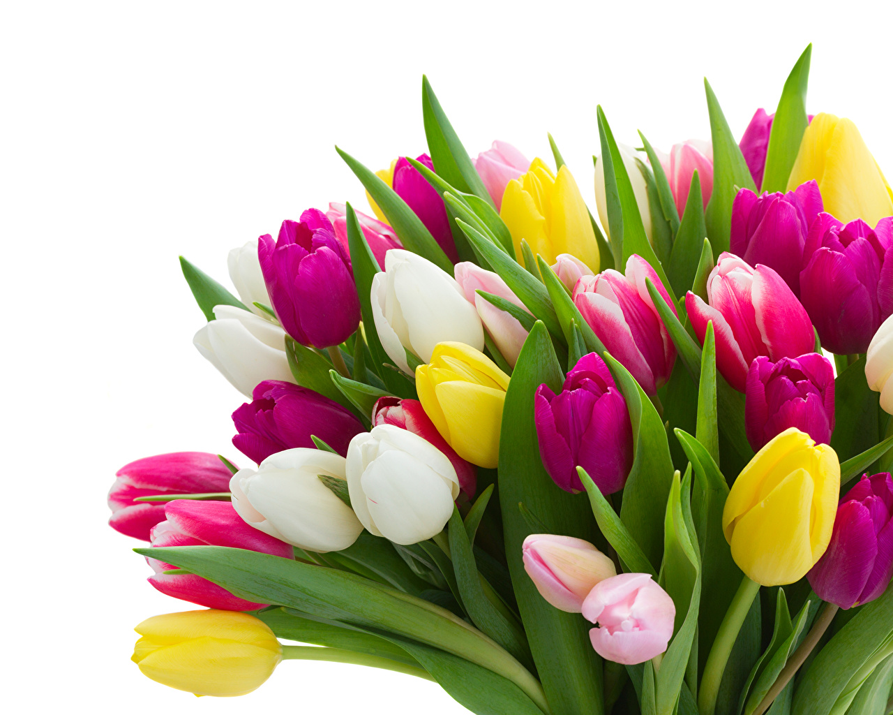 Bouquets Tulips Many 474704
